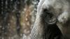 С начала года было убито рекордное число диких слонов