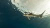 Спасатели убили раненую акулу, вызвавшую панику у берегов Майорки