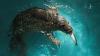 Огромный тюлень забрался на движущуюся моторную лодку, чтобы получить рыбу