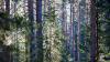 В Нижегородской области в лесу нашли мальчика с открытой травмой головы