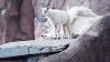 В Московском зоопарке родился детеныш снежных коз