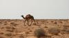 Более 50 мигрантов могли погибнуть в Сахаре, не добравшись до Ливии