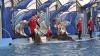 Дельфин-оракул предсказал, какие сборные выйдут в финал Кубка конфедераций