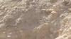 Редкое видео: волк преследует горного козла в Эйн Геди
