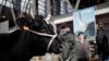 Катарский бизнесмен доставит в страну на самолетах четыре тысячи коров