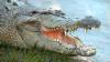 Видео: Журавль защитил своих птенцов от аллигатора