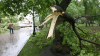 Полиция Бельц начала расследование инцидента с упавшим на 20 солдат деревом