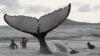 На Шри-Ланке моряки спасли жизнь 20 китам