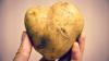 Китай намерен провести испытания на Луне, и попробовать выращивать там картофель