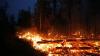 Мощные лесные пожары бушуют по всему миру