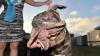 Самой уродливой собакой в мире признали неаполитанского мастифа по кличке Марта