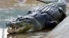 Видео: Парень попытался потрогать аллигатора и лучше бы этого не делал