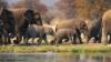 В Танзании дикие слоны ворвались в деревню и затоптали двух крестьян