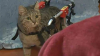 В Омске кошка Бусинка заново учится ходить после расстрела из пневматики
