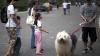 """В китайском городе ввели систему """"одна семья – одна собака"""""""