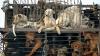 """С """"мясного"""" фестиваля в Китае спасли сотни собак"""