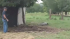 Ковбои поймали аллигатора при помощи лассо