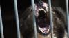 В Приморье сорвавшаяся с цепи собака загрызла ребенка
