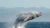 Горбатый кит чуть не перевернул лодку рыбаков в США