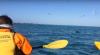 Видео: тюлень разорвал осьминога на глазах у туристов