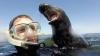 Дружелюбный тюлень попробовал путешественников на зуб