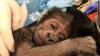 Врачи из обычной больницы помогли родить горилле, вид которой почти вымер
