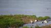 Вода во всех озерах столицы не соответствует санитарным нормам