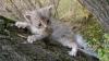 Подросток лишился рук, пытаясь снять котенка с дерева