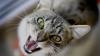 В Молдове выявлены два случая бешенства у животных