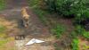 Попавший на карты Google любопытный пес очаровал пользователей сети