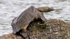 Черепаха разбила автомобиль в Китае