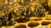 Пчеловод Владимир Митрюк потерял в этом году 60 пчелиных семей