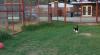 Бесстрашная кошка показала львице, кто здесь настоящий царь зверей