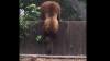 Мама поможет, даже если она медведица
