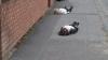 Учителя попросили детей притвориться мёртвыми, чтобы водители соблюдали ПДД