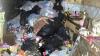 Полицейские нашли в доме кошатницы 30 тонн мусора и останки 15 животных