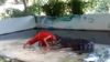 Крокодил прокусил голову дрессировщику на глазах у туристов: видео