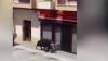 В Испании взбесившееся животное атаковало мотоцикл