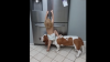 Пёс стал соучастником в ограблении холодильника, которое организовала малышка