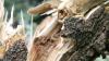 В Бельцах дерево упало на беседку, в которой находились 20 карабинеров