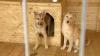 Задолжавшая своим детям 1,5 миллиона алиментщица прикинулась собакой
