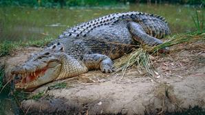 Прокуратура проверяет видео с купанием крокодила в Черном море