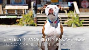 Собака стала мэром американского городка