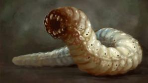 Фото: С МКС на Землю доставили двухголовых червей-мутантов