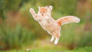 Выяснилось, как кошки покорили мир