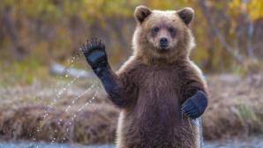 Фото: Медведь напугал участников забега в Колорадо-Спрингс