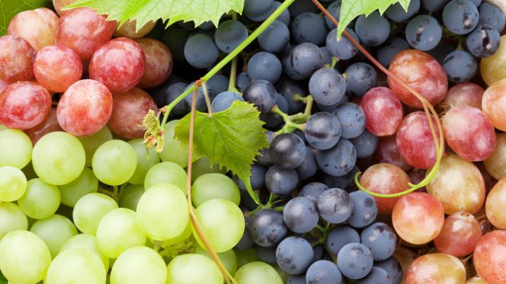Ученые клонировали виноград