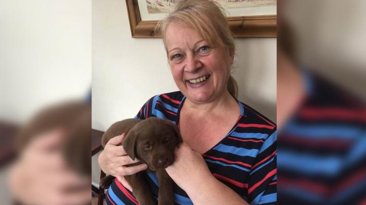 Дама отдала 700 долларов няне для собак, уехала в отпуск и получила фото убитого пса