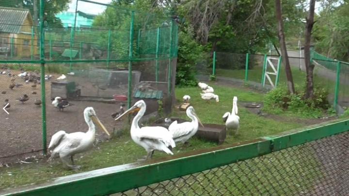 В зоопарке под Омском убили краснокнижных птиц, чтобы сделать из них шашлык