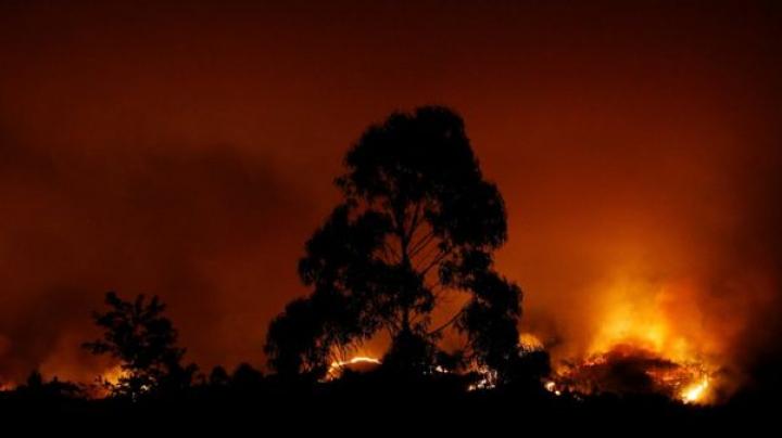 Во время лесных пожаров в Португалии 16 человек сгорели в своих машинах